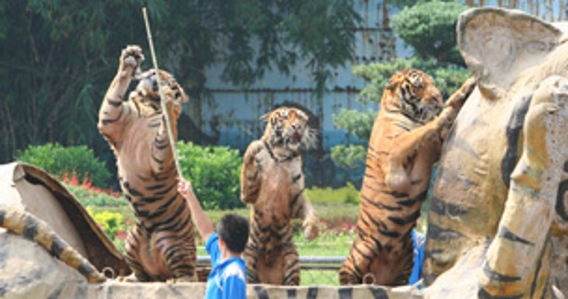 zoos a controversial issue in our Zoos will be forced to stop breeding and capturing more animals from the wild if their financial support disappears learn what you can do to help captive animals zoos: an idea whose time.