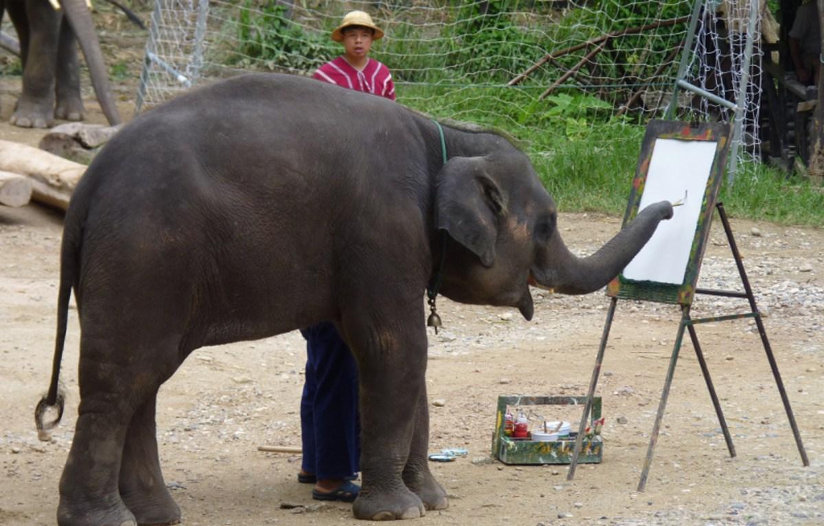 elephant artists here u0027s why making an elephant paint is cruel