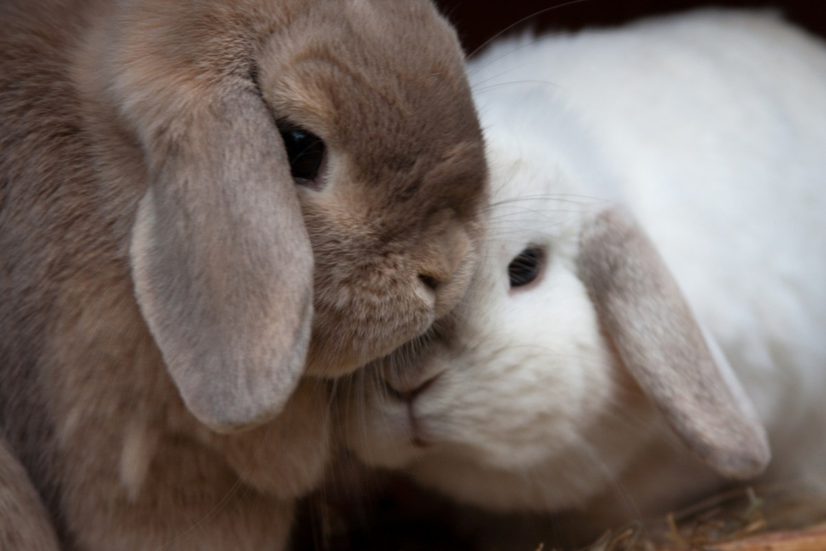 Hate Animal Cruelty You Should Probably Avoid These Cosmetic Brands