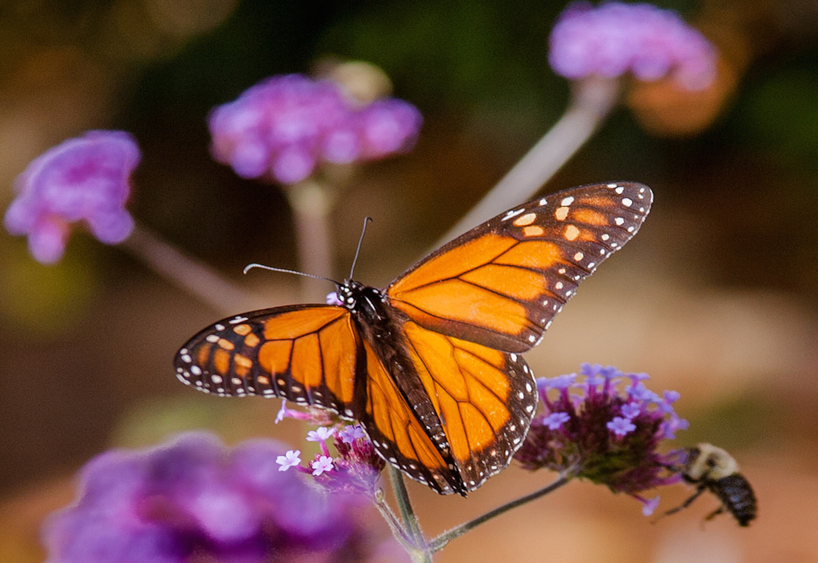 7 Ways to Attract More Butterflies to Your Garden (and Save Them ...
