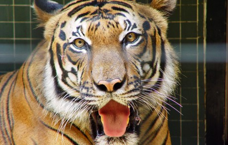 4 Ridiculous Reasons People Give for Keeping Exotic Animals as Pets