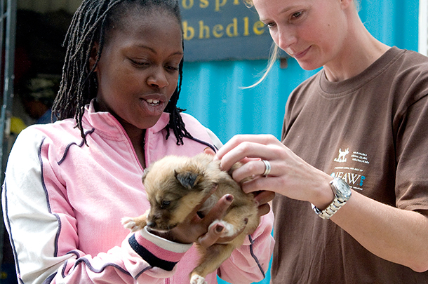 how showing compassion for animals can improve your health