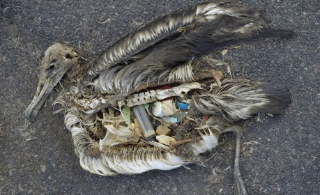 More Than Just Trash ... How Chemicals That Come With Plastic Pollution Harm You and Animals