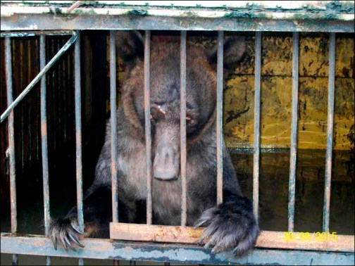 Animals That Nearly Drowned in Zoo Flood Back in Captivity ...