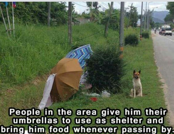 Strangers Show Kindness to Dog Who Refuses to Leave the ...