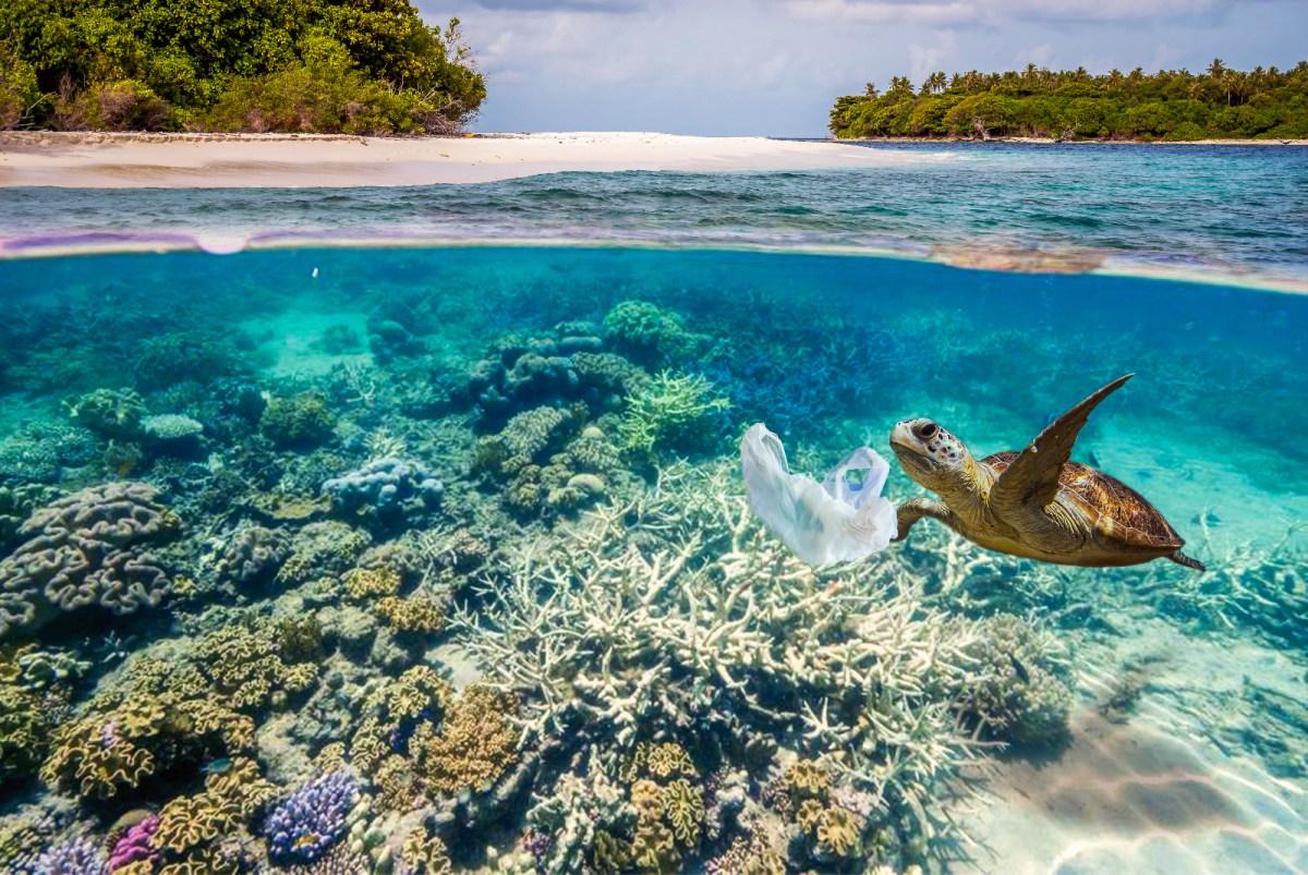 700 marine species might go extinct because of plastic pollution
