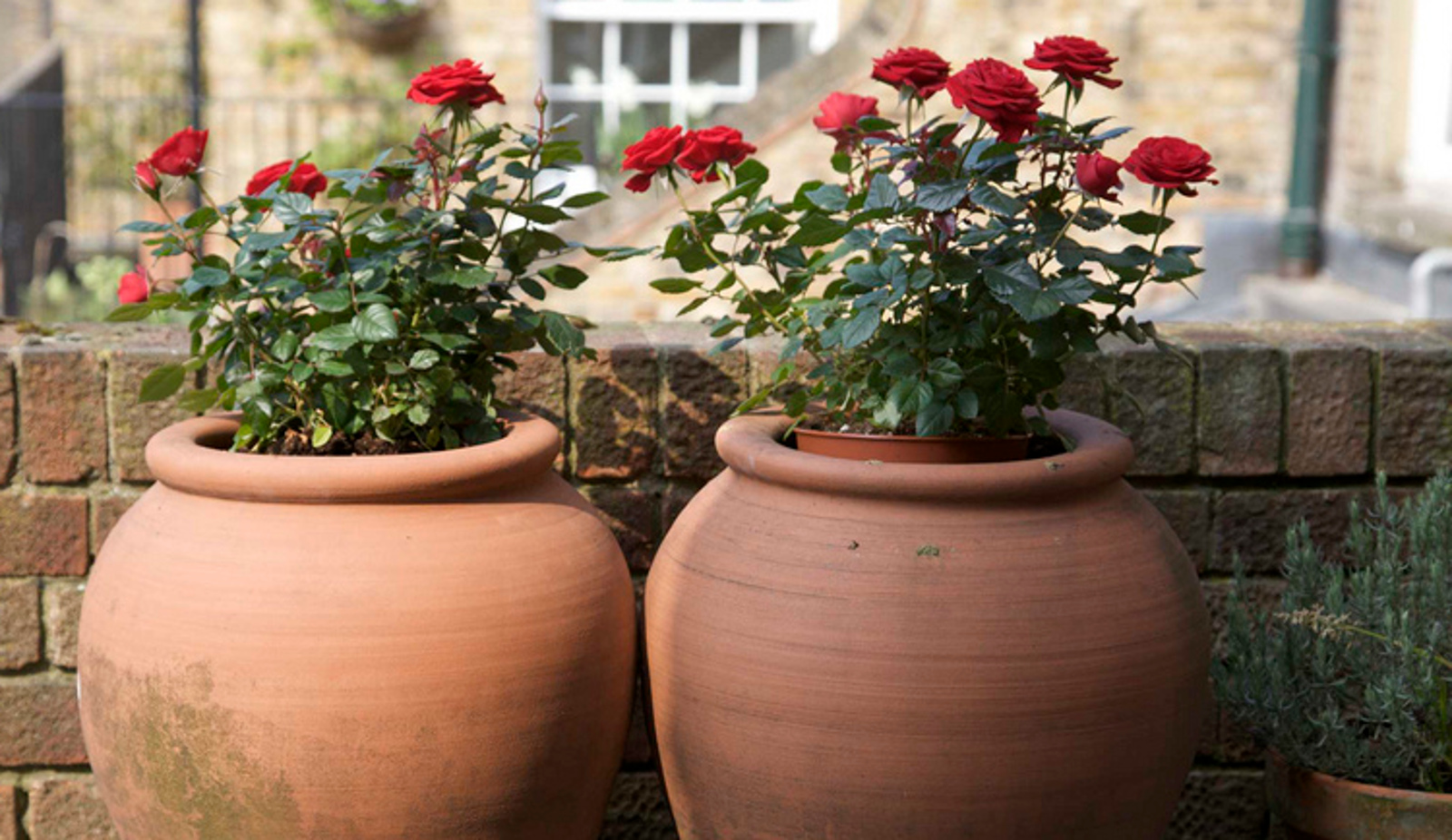 What It Takes to Make a Good Potting Mix at Home - One Green Planet
