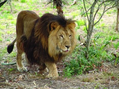 Borne Free Lyon : after spending most of their lives locked up in zoos these 5 animals are finally safe in ~ Medecine-chirurgie-esthetiques.com Avis de Voitures