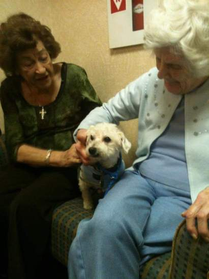 These 5 Incredible Organizations Are Changing Lives by Training Shelter Dogs to Become Therapy Animals