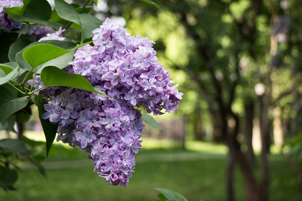 Plantas que atraen a colibríes, mariposas, & amp; Abejas