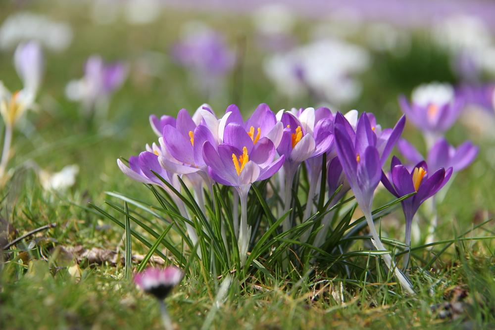 Flores que atraen a las abejas y las mariposas | Almanaque del Viejo Agricultor