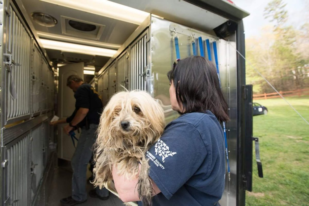 recent rescues demonstrate the importance of continuing the fight