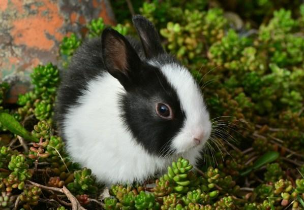 hare-2135472_1920
