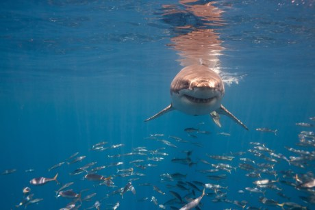 This Brilliant Organization is Fighting the Cruel Practice of Shark Finning in Costa Rica