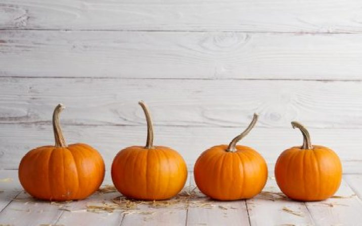 4 small pumpkins in a row