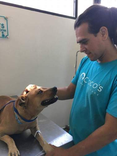 These Incredible Organizations Are Working to Help Dogs and Cats in Mexico