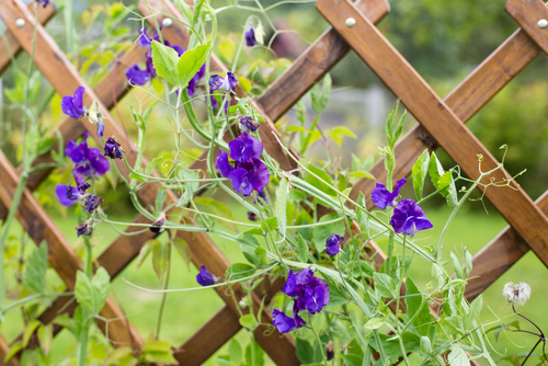7 DIY Projects for Beautifying Your Fence