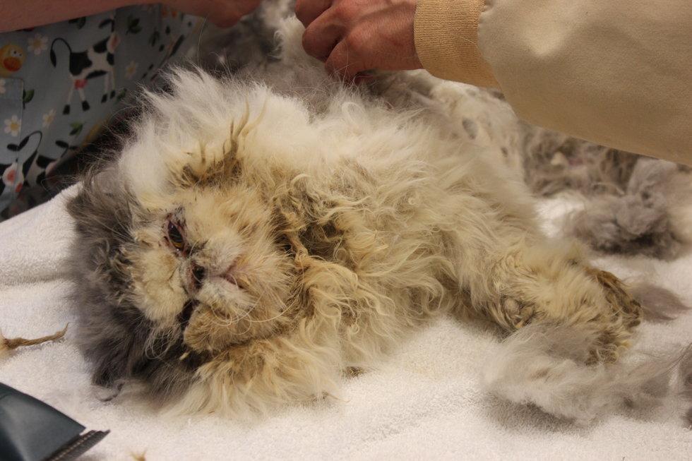 Taken Care Of Long Hair Cats