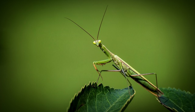 Animals and Insects That Help Control Garden Pests