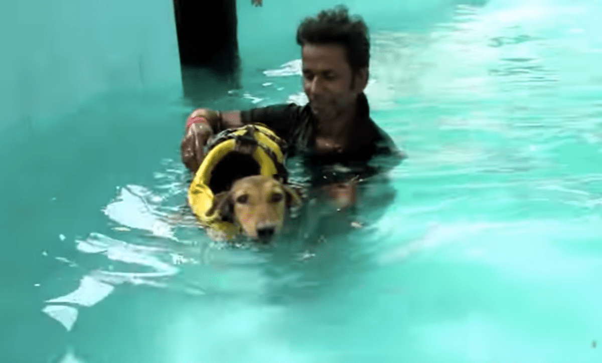 Rescuers Tried Everything They Could to Make This Dog Walk Again –Check Him Out Now! (VIDEO)