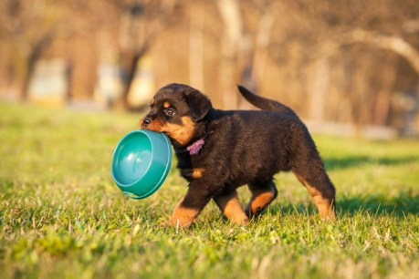 Wild Earth Is Reinventing Pet Food: Here's Why That's a Big Deal