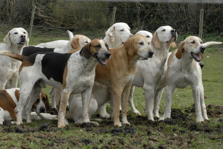 Petition: Stop Cruel Hound Hunting and End the Suffering Of Defenseless Wildlife