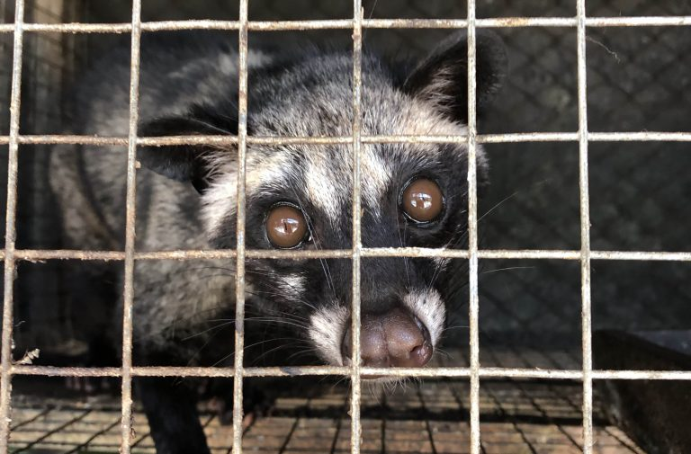 Petition: Research Finds World's Most Expensive Coffee Kopi Luwak Linked to Transmitting SARS Virus to Humans
