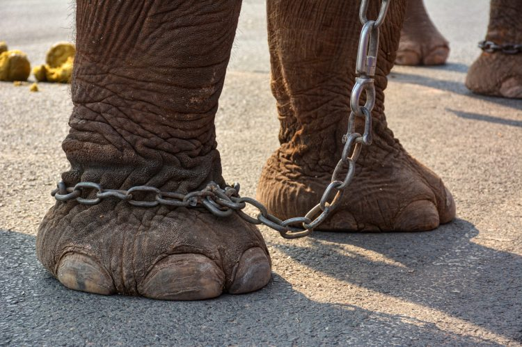 Petition: Strengthen Animal Cruelty Laws in Sri Lanka to Protect Elephants