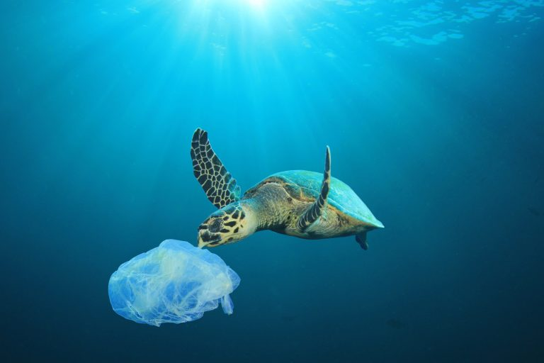 Petition: Plastic Pollution Critical Threat to Florida Sea Turtles