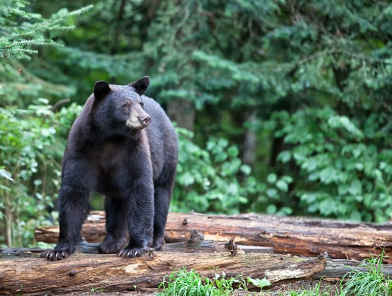 Petition: Governor Phil Murphy, It's Time to End Bear Hunting Season in New Jersey Which Starts This October