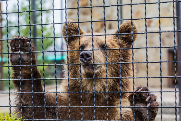 Petition: Send Hungry, Neglected Bear in Desperate Need of Medical Attention to Sanctuary