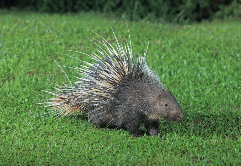 Petition: Maine Police Officers Fired After Beating Porcupines to Death