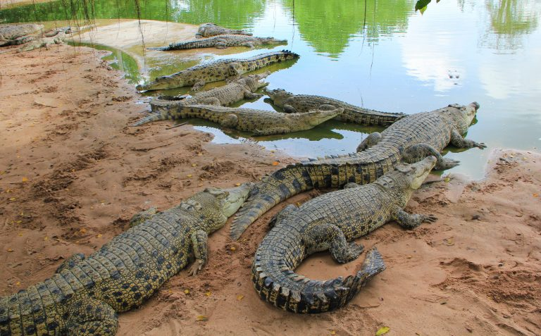 Petition: Hermès to Build New Farm and Kill Over 50,000 Crocodiles to Supply Skins to Make Bags and Shoes