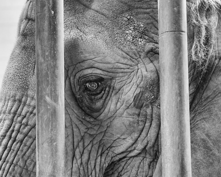Petition: Demand Himeji City Zoo Not Get Another Elephant After Himeko's Death