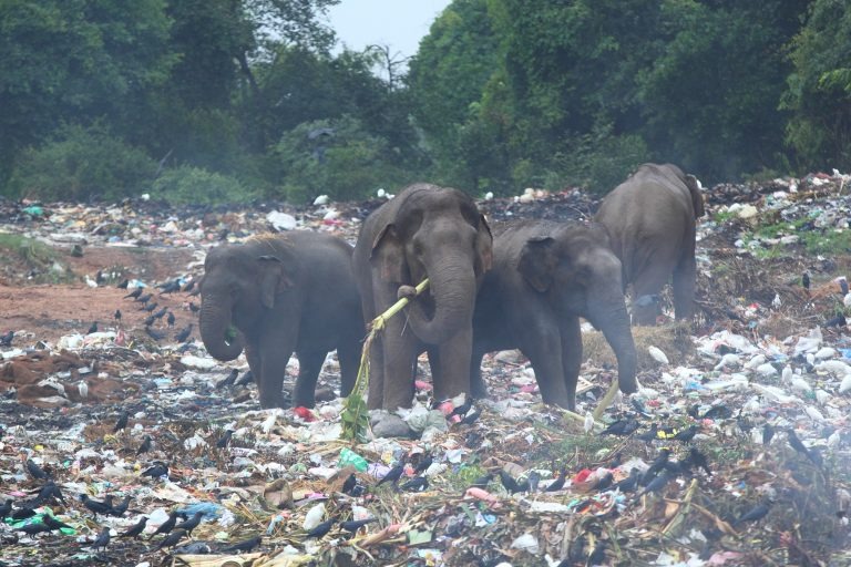 Petition: Tell Sri Lankan Officials to Protect Elephants and Their Habitats
