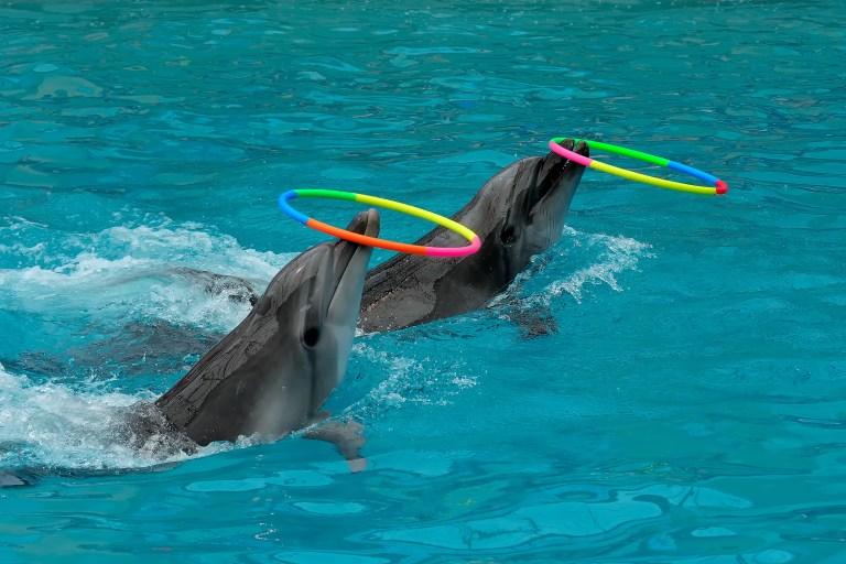 Petition: Major French Amusement Park Shuts Down Dolphin Show