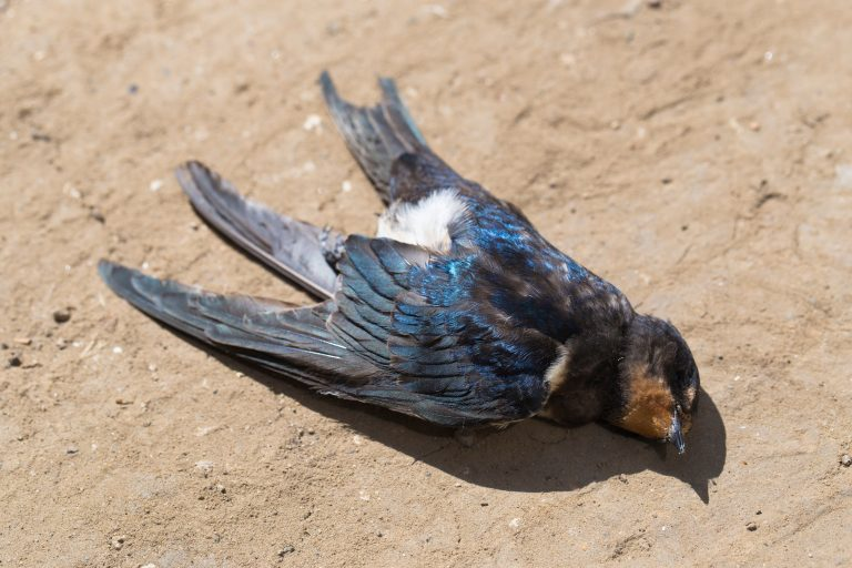 6 Ways Humans are Responsible for Mass Bird Deaths