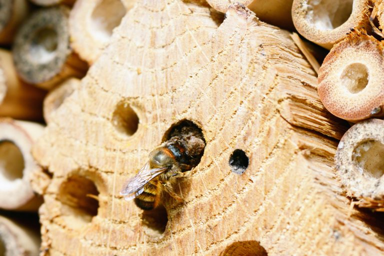 Petition: Protect Bees in the US