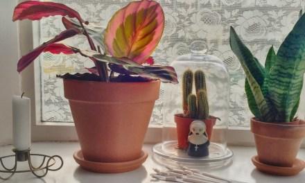 Hip & happening: kamerplanten (laat je inspireren)