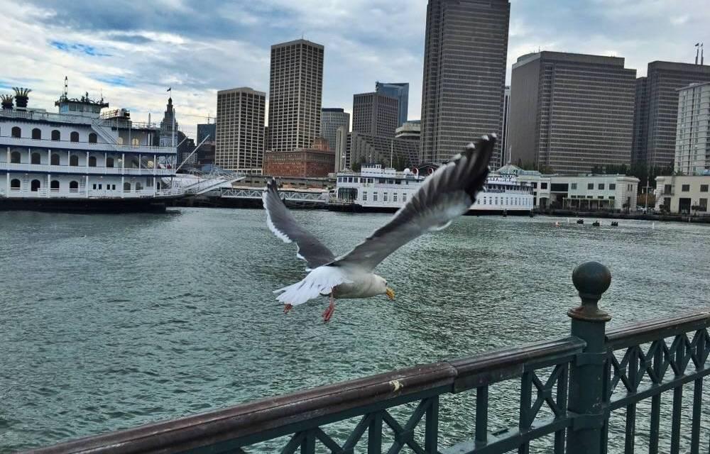 Mijn eerste 8 uur in San Francisco in vogelvlucht