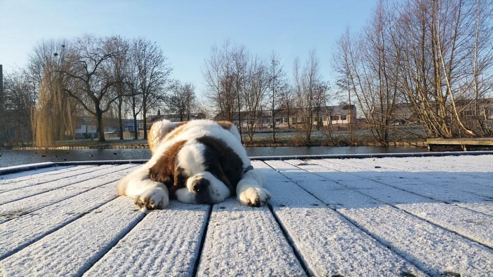 fotograferen sneeuw