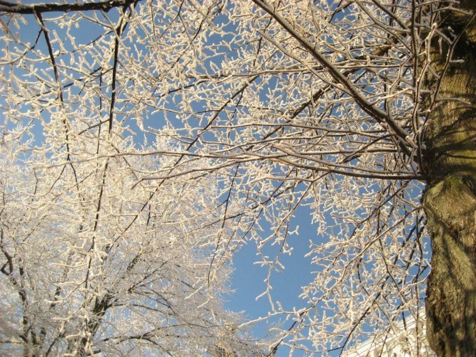 fotograferen in de sneeuw