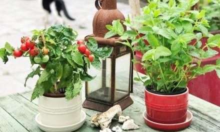 Winnen: Le Creuset kruidenpotten