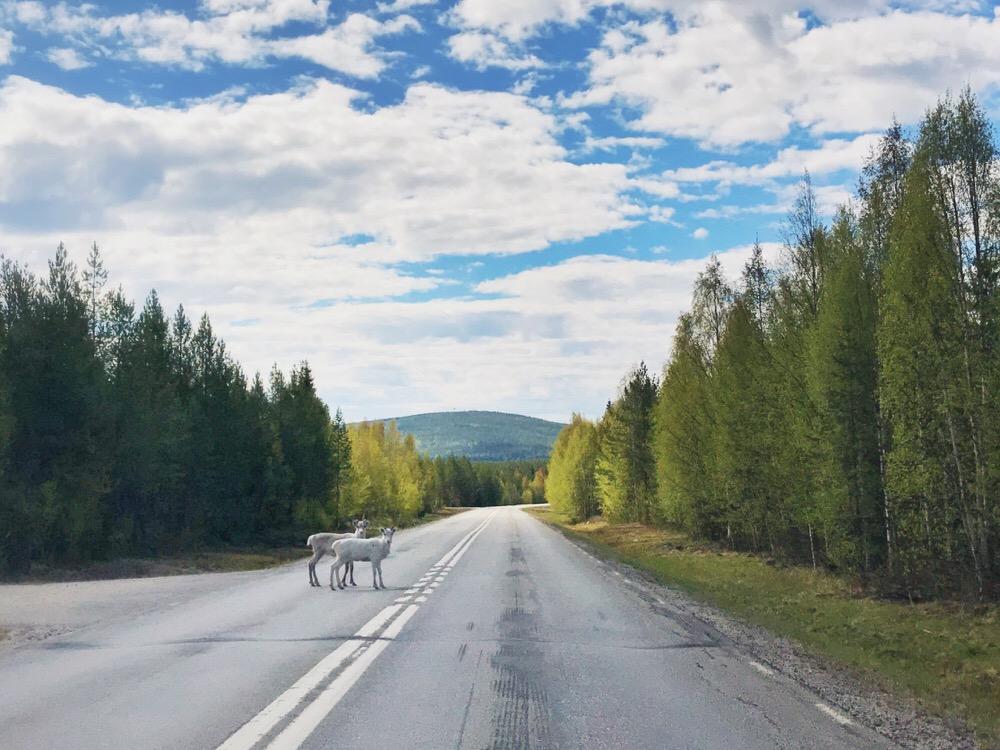 wild life Sweden