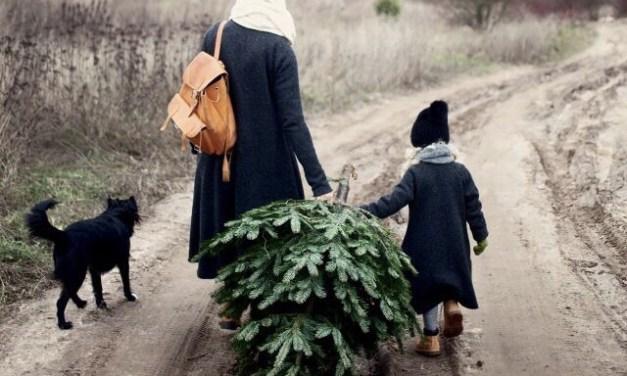 Waar komt de kerstbomen traditie + versiering vandaan?