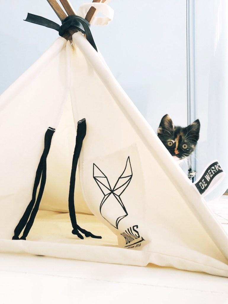 Malibu achter de kattentipi