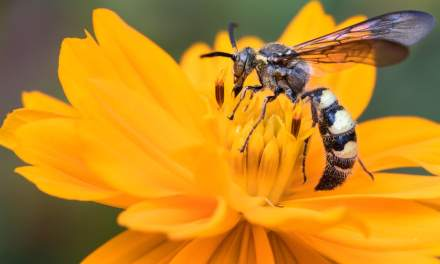 Wat kun je doen tegen wespen? 5 tips