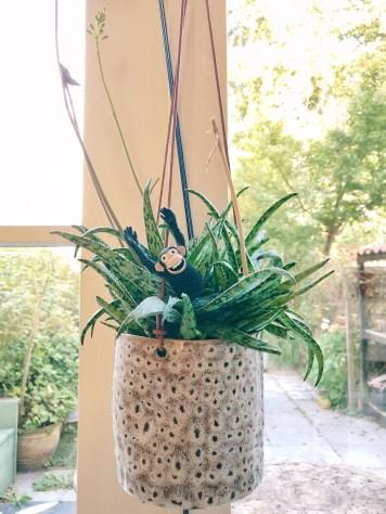 aapje in plant