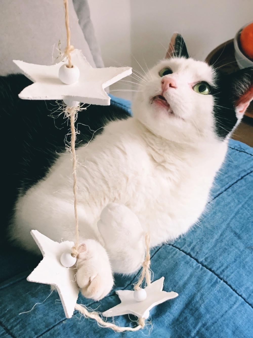 sterren van witte klei