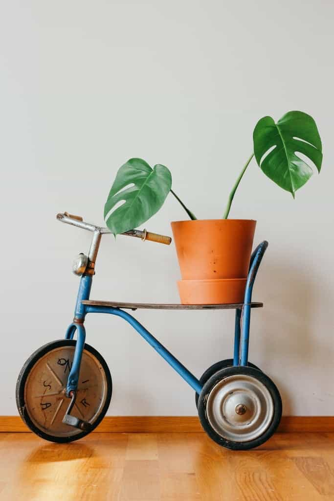 Monstera tips en inspiratie